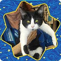 Adopt A Pet :: Michael - San Bernardino, CA