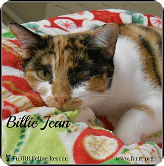 Domestic Shorthair Cat for adoption in Gonic, New Hampshire - Billie Jean