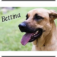 Labrador Retriever/Anatolian Shepherd Mix Dog for adoption in El Cajon, California - Bettina