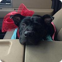 Adopt A Pet :: Rae - Fort Atkinson, WI