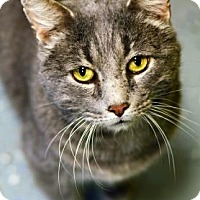 Adopt A Pet :: Kirby - Fort Smith, AR