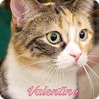 Adopt A Pet :: Valentine - Livonia, MI