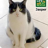 Adopt A Pet :: Jasper - Oakville, ON