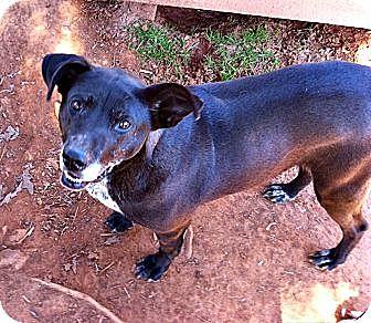 Terrier (Unknown Type, Medium)/Labrador Retriever Mix Dog for adoption in Spartanburg, South Carolina - Addie