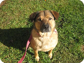 Chow Chow/Shepherd (Unknown Type) Mix Dog for adoption in Bedford, Virginia - Lizzy