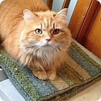 Adopt A Pet :: Precious - Frederick, MD