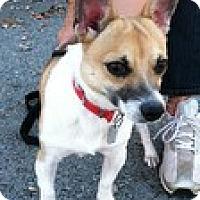 Adopt A Pet :: Callaway(Extremely Urgent) - Brattleboro, VT