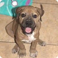 Adopt A Pet :: Frankie - Lighthouse Point, FL