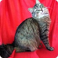 Adopt A Pet :: Chloe - Whitestone, NY