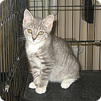 Adopt A Pet :: PATTY - Hamilton, NJ