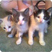 Adopt A Pet :: Ali, Yuma and Sensai - Proctor, MN