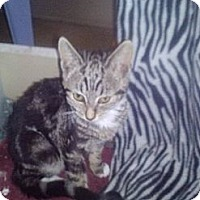 Adopt A Pet :: Jason - Tarboro, NC