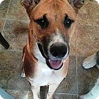 Adopt A Pet :: Buck - Vista, CA