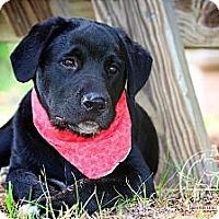 Adopt A Pet :: Panda - Wilmington, DE