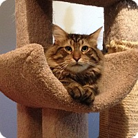 Adopt A Pet :: Benji - Mount Clemens, MI