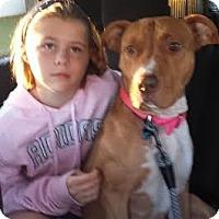 Adopt A Pet :: Delilah - Sanford, NC