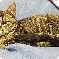 Adopt A Pet :: Mica - Chandler, AZ
