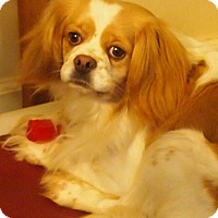 Adopt A Pet :: Yoko - Prole, IA