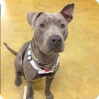 Adopt A Pet :: Steve-O - Sacramento, CA