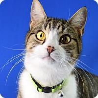 Adopt A Pet :: Dayton - Carencro, LA