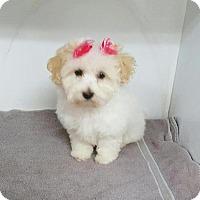 Adopt A Pet :: Brandi - San Dimas, CA