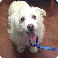 Adopt A Pet :: Toby - Oak Ridge, NJ