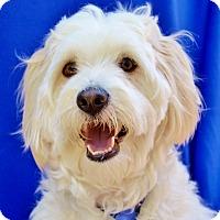 Adopt A Pet :: Louie - Irvine, CA