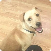Adopt A Pet :: Rex - Vacaville, CA