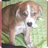 Adopt A Pet :: Angelo - El Cajon, CA
