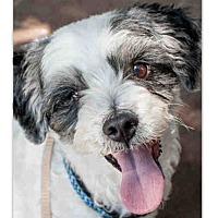 Adopt A Pet :: Dallas - VIDEO! - Los Angeles, CA