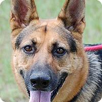 Adopt A Pet :: Sophie AD 09-17-16 - Preston, CT