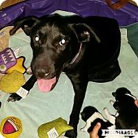 Adopt A Pet :: Molly - Aurora, IL