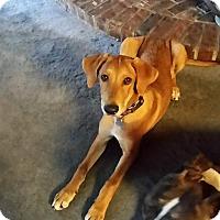 Adopt A Pet :: Jack - Bonney Lake, WA