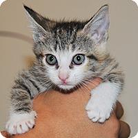 Adopt A Pet :: Cali - Agoura Hills, CA