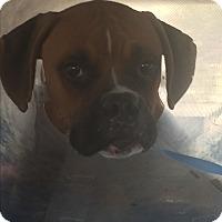Adopt A Pet :: Zakky - Austin, TX