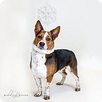 Adopt A Pet :: Rio - Naperville, IL