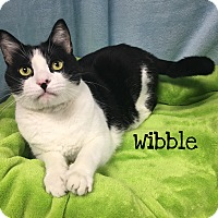 Adopt A Pet :: Wibble - Foothill Ranch, CA