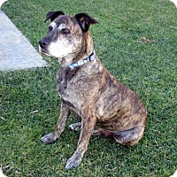 Adopt A Pet :: Cookie - Irvine, CA