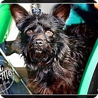 Adopt A Pet :: Emmitt - Albany, NY