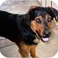 Adopt A Pet :: Scooby - dewey, AZ