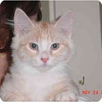 Adopt A Pet :: Peach - Pendleton, OR