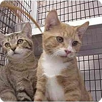Adopt A Pet :: Butterscotch & Sean - Deerfield Beach, FL