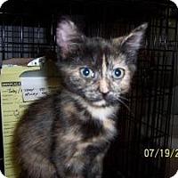Adopt A Pet :: Paprika - Island Park, NY