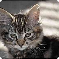 Adopt A Pet :: Teresa - Modesto, CA