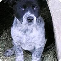Adopt A Pet :: Pepper - Waller, TX