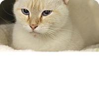 Adopt A Pet :: Indiana - El Cajon, CA