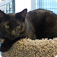 Adopt A Pet :: Fernley - Victor, NY
