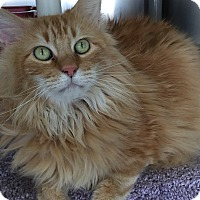 Adopt A Pet :: Jesse - Topeka, KS