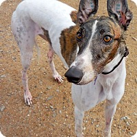 Adopt A Pet :: Piper - Tucson, AZ