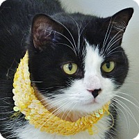 Adopt A Pet :: Oreo 2 - Chambersburg, PA